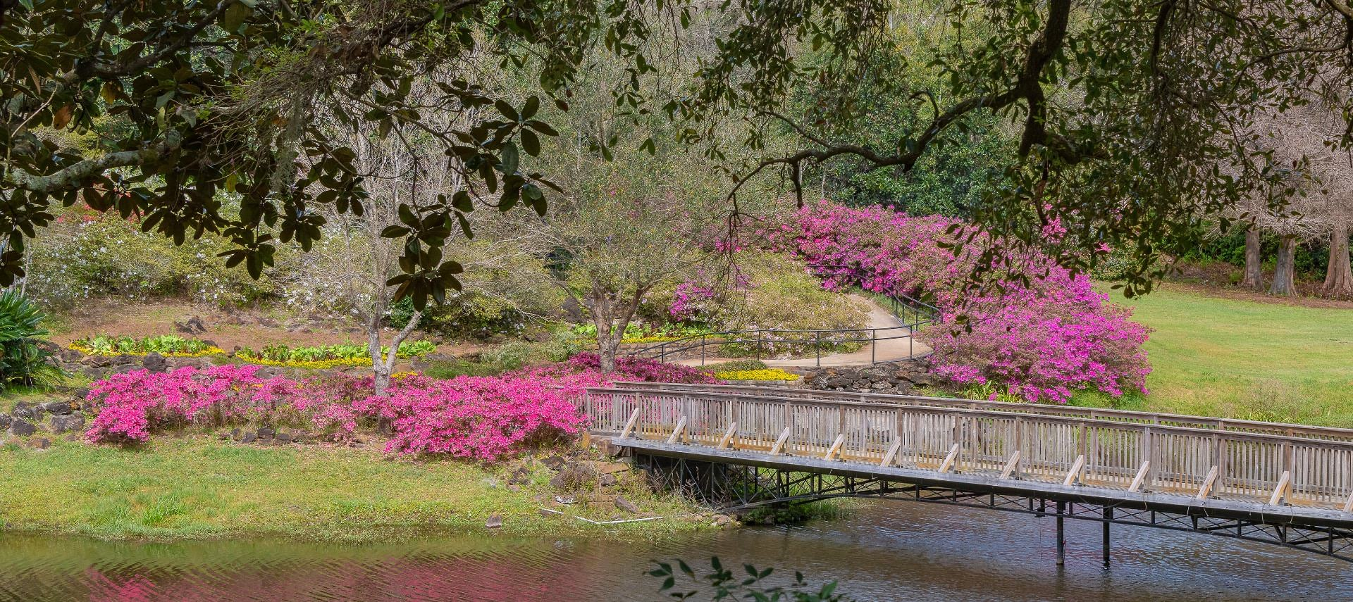 Small river with bridge surrounded by nicely cut grass, trees, and bushes with bright pink flowers